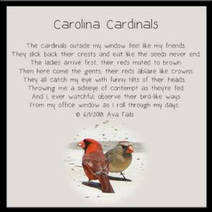 carolina cardinals by ava fails
